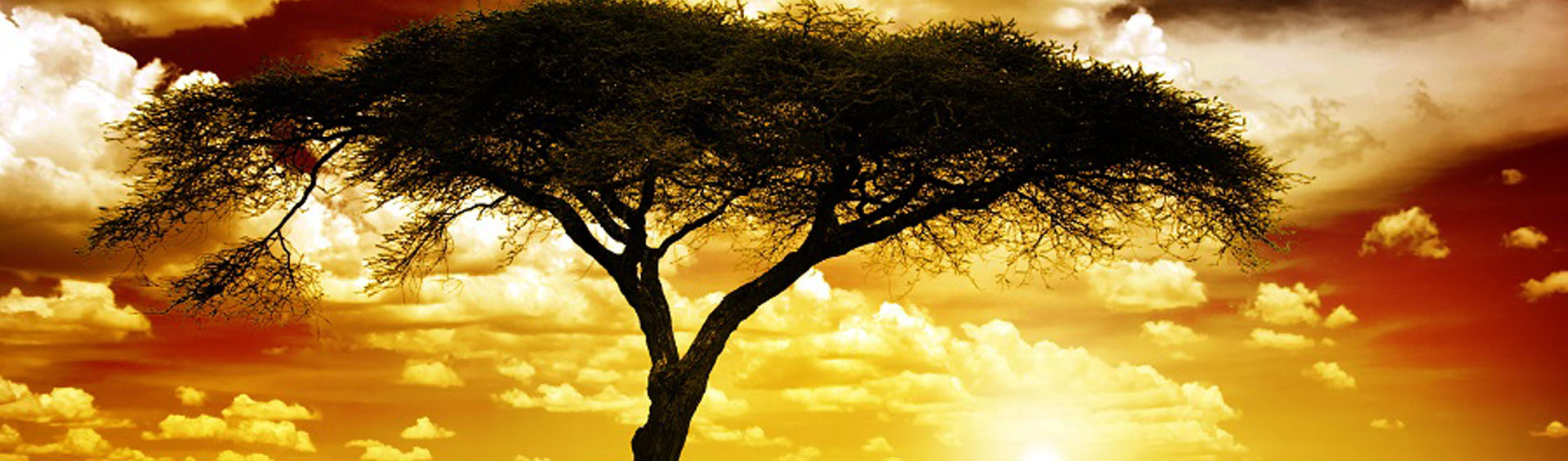 Book Cheap Flights To Africa From London Cheap Tickets To